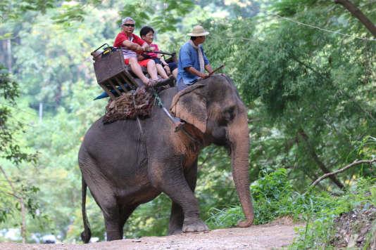 Un couple de touristes en pleine balade à dos d'éléphant.