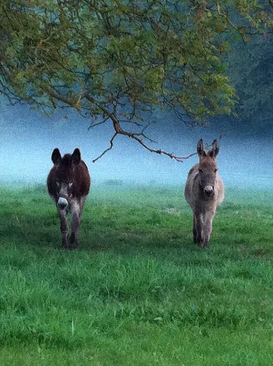 Le couple d'ânes suffit à occuper les enfants pour le week-end.