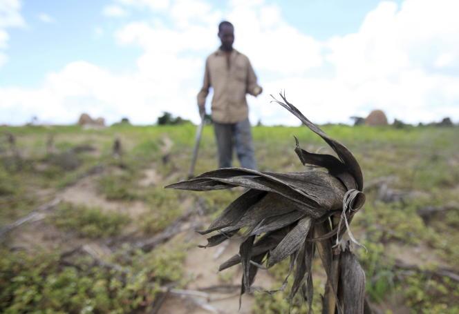 Sécheresse au Zimbabwe en janvier 2016.