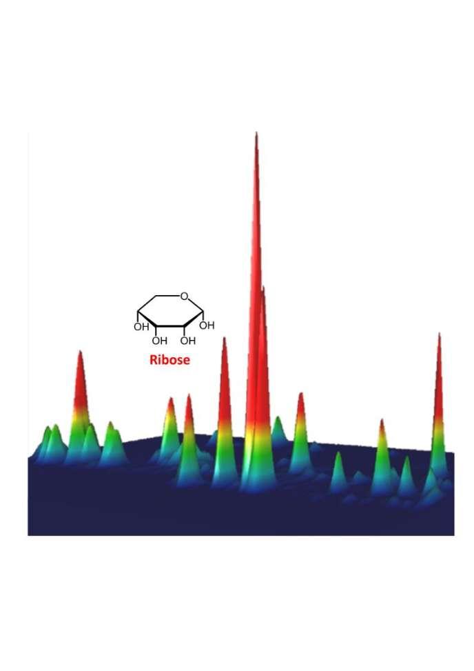 Différents pics correspondants à la présence de sucres, dont le ribose, suite à l'irradiation aux ultraviolets de grains de poussières entourés de glace