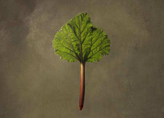 La rhubarbe, un déroutant légume ouvert aux quatre vents.