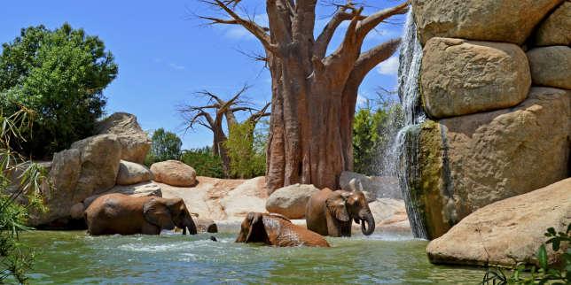 Moins chère qu'un safari en Tanzanie, la savane africaine du Bioparc de Valence.