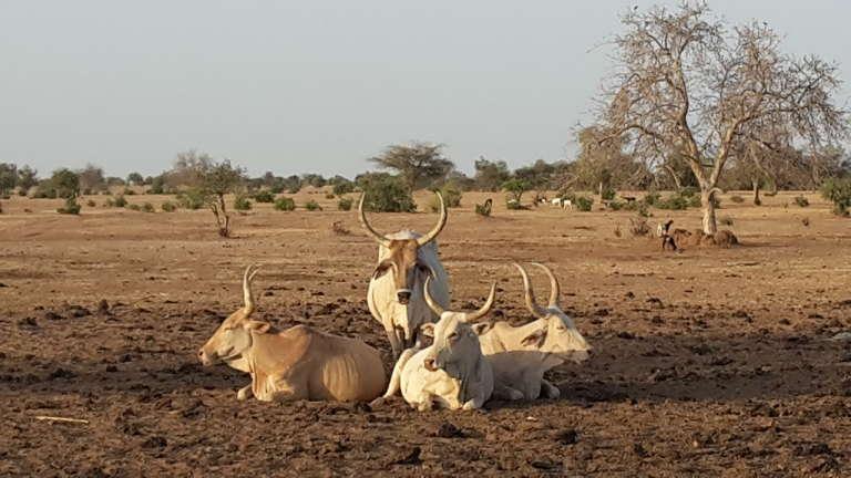 A Widou, au Sénégal.