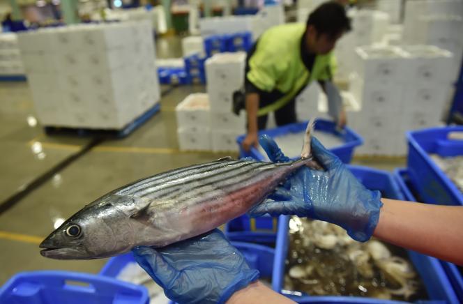 Un thon albacore, au marché aux poissons de Sydney (Australie), en décembre 2014.