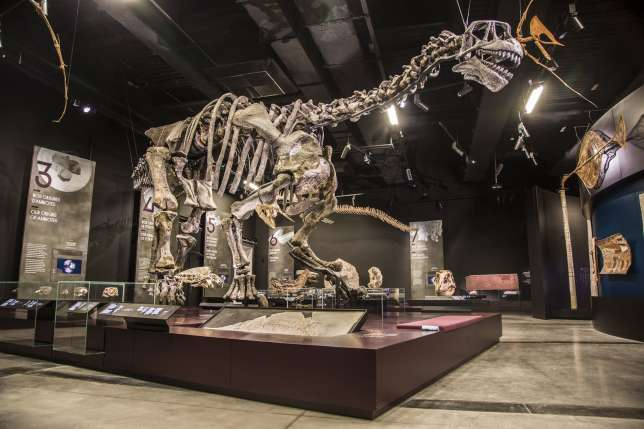 Le Camarasaurus, un spécimen unique en Europe à découvrir au musée des Confluences à Lyon.