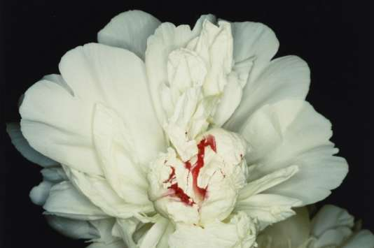 """Fête des anges : scènes de sexe"",  de Nobuyoshi Araki, 1992."