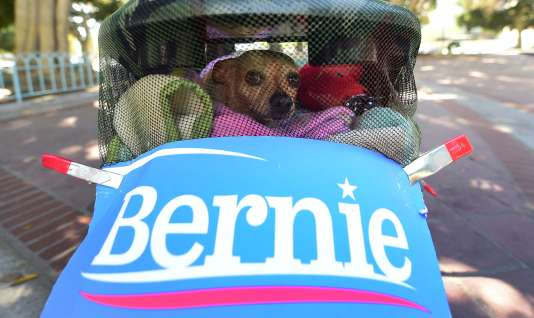 Fritz, le chihuahua, fait campagne pour Bernie Sanders à Los Angeles, le 20 avril 2016.