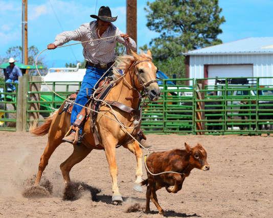 Le calf-roping consiste à attraper un veau le plus rapidement possible.