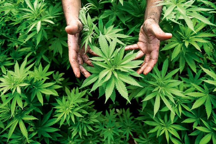 L'Alabama conserve une des législations les plus sévères des Etats-Unis en ce qui concerne le cannabis.