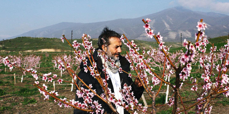 Ovik Asmaryan, examine un pêcher dans son vergers. D'origine arménienne, nait à Alep en Syrie, il a fuit la guerre en 2012 pour s'installer avec sa famille et son frère à Stepanakert dans le Haut-Karabakh.  Ovik a investit dans des cultures sous serres, il y cultive des agrumes, des fleurs, des cactus et divers fruits. Il retourne régulièrement en Syrie, pour y ramener des arbustes, qu'on ne trouve pas en Arménie.