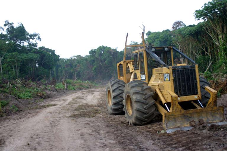 Dans la province de l'Equateur, dans le nord du Congo en 2004.