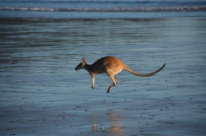 """Résultat de recherche d'images pour """"photo bond de kangourou"""""""