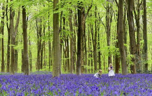 Une forêt dans le sud de l'Angleterre en mai 2015.