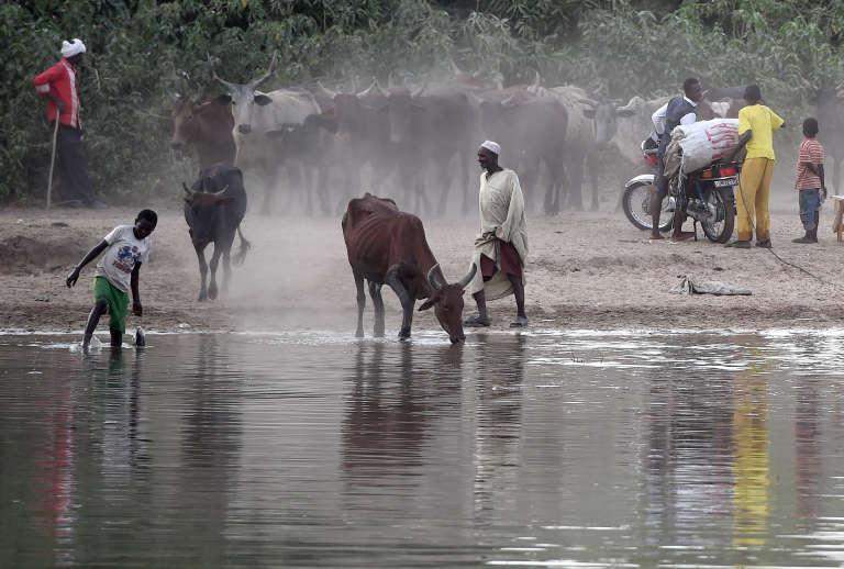 Un éleveur au bord du lac Tchad.