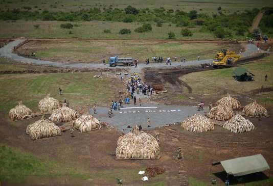 Plusieurs tonnes de défense d'ivoire illégales sont préparées pour être brûlées par les autorités au Parc national de Nairobi au Kenya le 28 avril 2016.