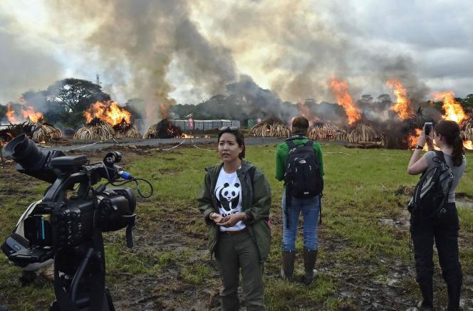 Une équipe de télévision chinoise devant les onze bûchers qui consument les 105 tonnes d'ivoire que Nairobi a décidé de réduire en cendres, le 30 avril 2016, pour lutter contre le braconnage.