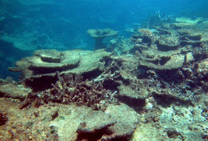 Une photographie de l'Institut australien des sciences de la mer montre les dommages  causés sur un récif de corail de la Grande Barrière de corail, en Australie, par les tempêtes, les étoiles de mer toxiques et le changement climatique.  La Grande Barrière de Corail a perdu plus de la moitié de sa couverture corallienne lors des vingt-sept dernières années.