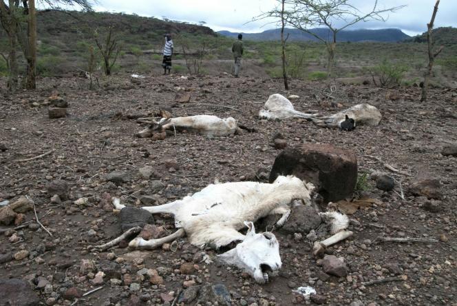 En avril, un berger de la région de Sitti, dans l'Est de l'Ethiopie, ne peux que compter ses animaux morts en raison de la sécheresse.