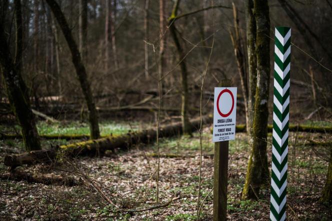 La forêt primaire de Bialowieza, en Pologne, en 2016.