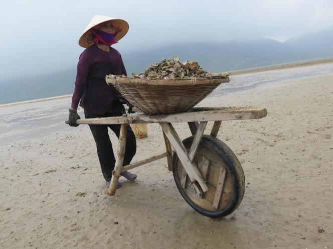 Une femme recueille des coquillages morts sur une plage de la province de Ha Tinh, le 27 avril 2016.