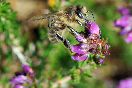 Les députésrefusent de fixer une date butoir à l'interdiction complète des néonicotinoïdes, ces pesticides reconnus comme nocifs pour les insectes pollinisateurs.