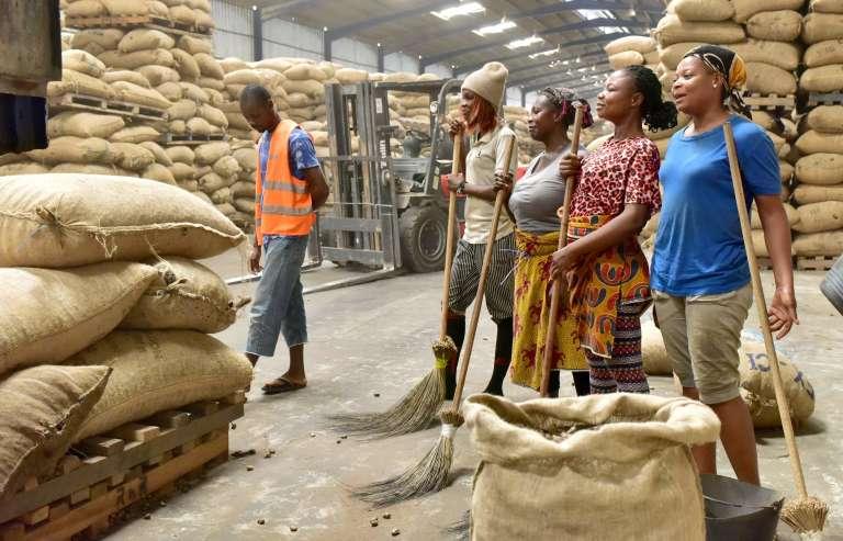 Des employés de la filière de l'anarcade à Abidjan.La Côte d'Ivoire produit plus de 725 000 tonnes de noix de cajou par an, davantage que l'Inde ou le Vietnam.