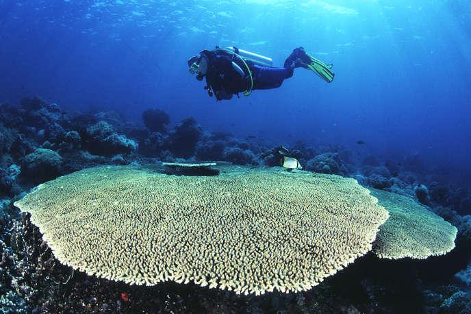 Coraux à Rangiroa, dans l'archipel des Tuamotu (Polynésie française).