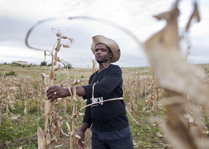 L'enjeu de l'agriculture africaine est crucial.