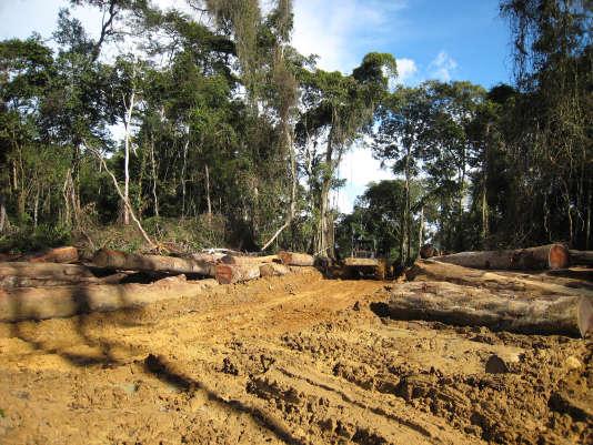Une vue de la forêt camerounaise près de la frontière avec le Gabon, en octobre 2007.