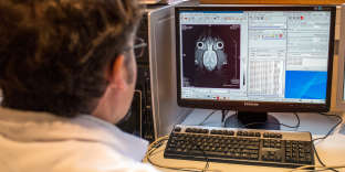 A laboratory assistant looks at a computer screen as he works with a magnetic resonance imaging (MRI) device dedicated to the mouse and rat to study anatomical and functional imaging of the brain and organs on January 23, 2014 at the Neurosciences rechearch Center CERMEP in Bron, near Lyon.  AFP PHOTO / PHILIPPE MERLE / AFP PHOTO / PHILIPPE MERLE