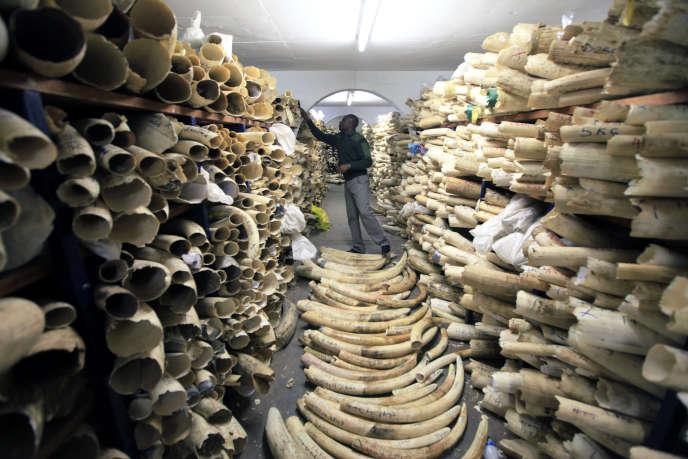 Stocks de défenses d'éléphants détenus par l'administration des parcs nationaux du Zimbabwe à Harare, le 2 juin 2016. Ils représentent 93 tonnes d'ivoire d'une valeur estimée à 15 millions de dollars. Le braconnage touche tous les pays d'Afrique.