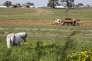 La ferme, le « Haras du pin», àNonant-le-Pin, le 23 mai 2012.