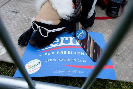 Le chien Frisco déguisé en Bernie Sanders, candidat à l'investiture démocrate, àSan Francisco, lundi 6 juin.