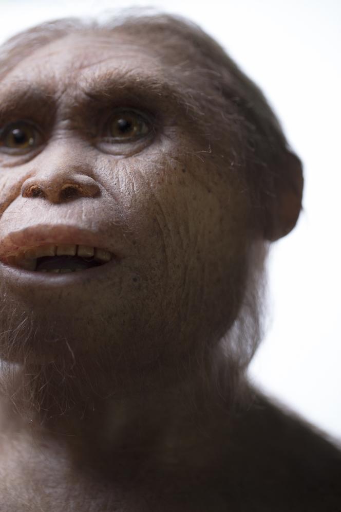 Reconstitution d'« Homo floresiensis» par l'Atelier Elisabeth Daynes.