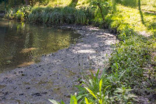 Le bassin des Damoiseaux à Igny est en cours de transformation en zone humide.