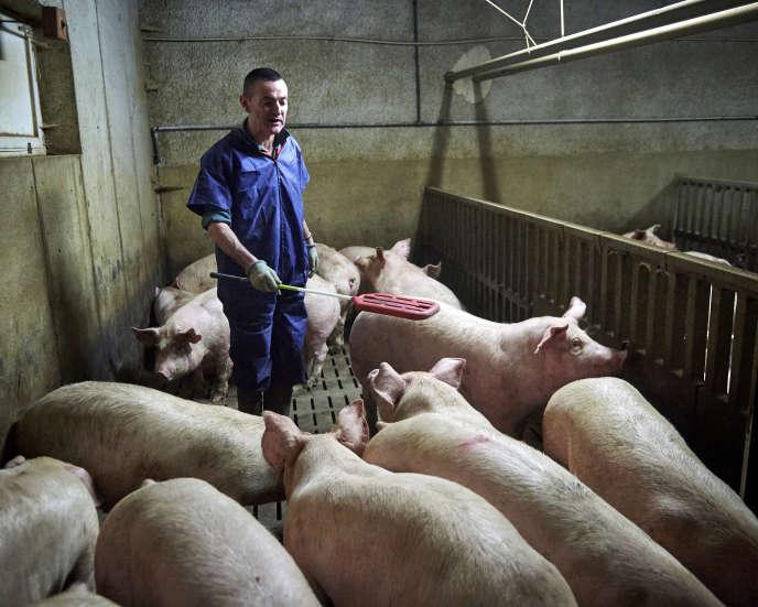 Jean-Michel Juel, éleveur porcin,à Plédéliac (Côtes-d'Armor), en février.