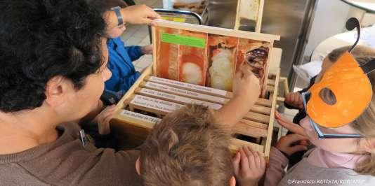 La ruche pédagogique explique les étapes de la vie de la ruche aux enfants.