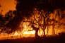 Dans le comté de Santa Barbara, une superficie de 3 000 hectares a déjà été dévastée dimanche 19 juin.