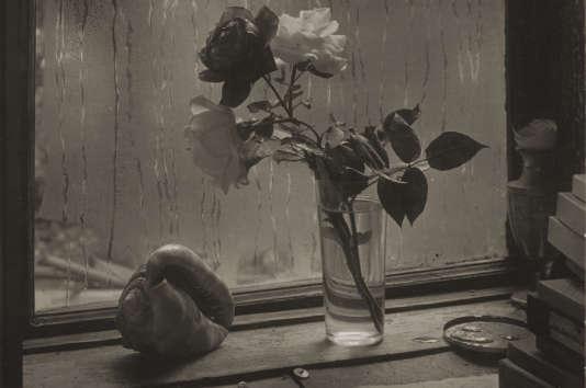 «La Dernière Rose»,1956, deJosef Sudek.