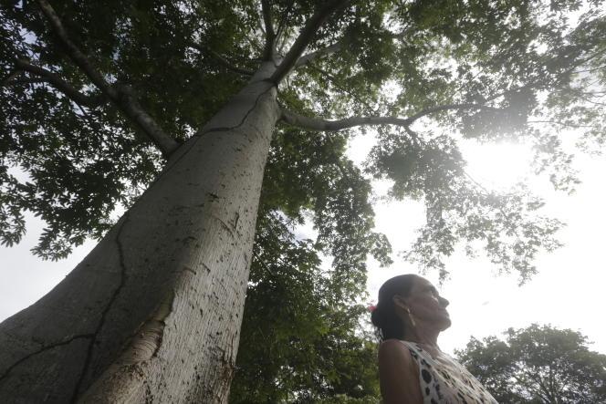 Marina Alves de Araujo, la veuve de Raimundo Chagas, assassiné en 2010 en raison d'un conflit forestier dans l'Amazonie brésilienne.