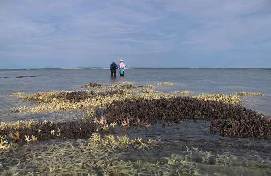 De 39 000 à 45 000 emplois australiens sont liés à l'exploitationtouristique de la Grande Barrière de corail.