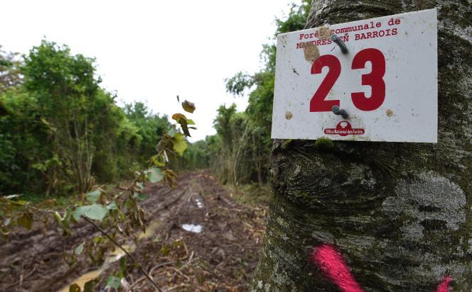Des anti-Cigéo occupent le bois de Mandres-en-Barrois, acquis par l'Agence nationale pour la gestion des déchets radioactifs, porteuse du projet Cigéo.
