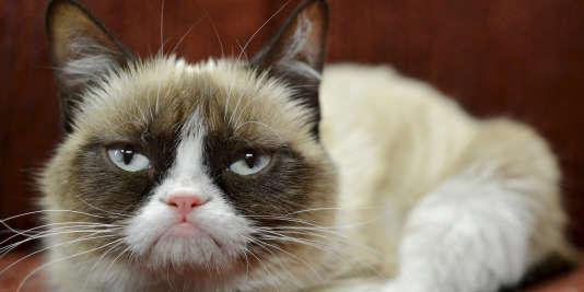 Non, Grumpy Cat ne fait pas la gueule, elle est née comme ça !