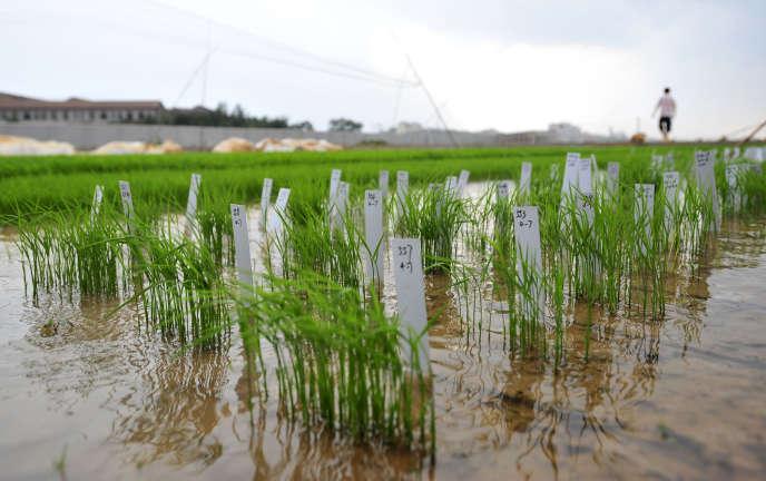 Une ferme à Wuhan, dans le centre de la Chine, le 11 juin 2011.