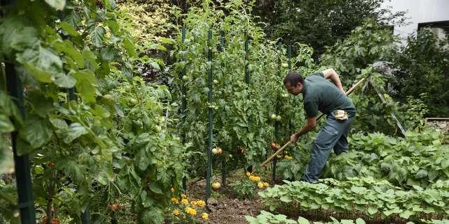 Jardin comment cultiver un potager bio for Agencer un jardin potager