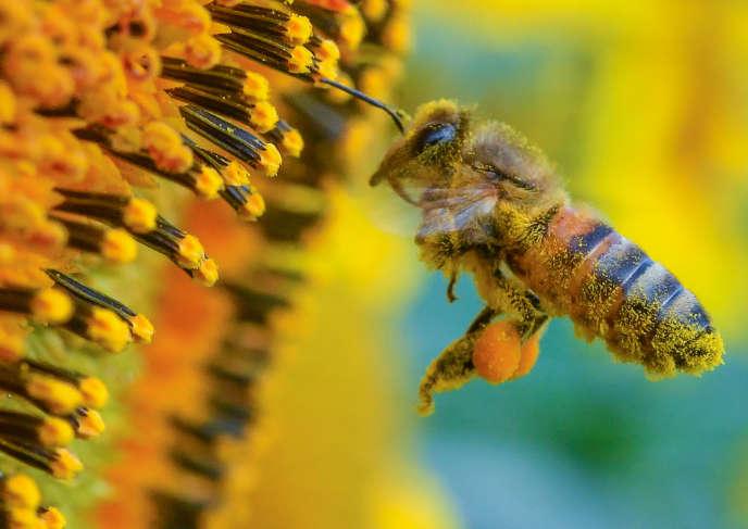 La dégradation de la biodiversité est telle que l'être humain pourrait être contraint de remplacer de nombreux services rendus par la nature comme la pollinisation.