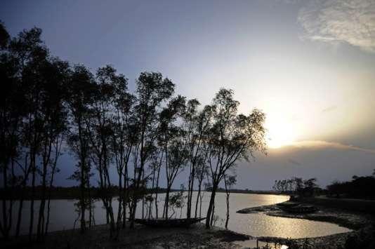 Mangroves dans les Sundarbans près de Khulna, en 2009.