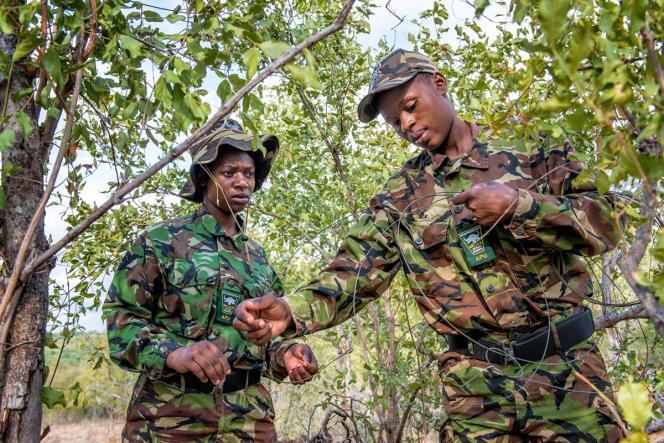 Les Black Mambas Cute Mhlongoet Nkatelo Mzimba en patrouille démontent un piège de braconniers.