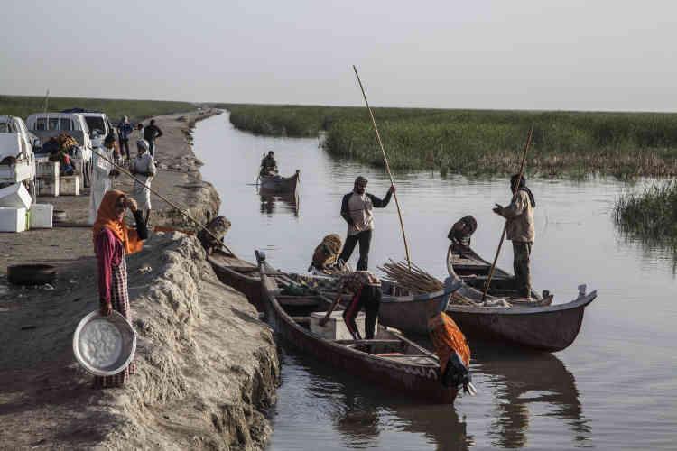 Au petit matin, les pêcheurs amènent leur pêche aux grossistes qui les attendent sur le marché de l'ancienne route de sécurité de Saddam Hussein. Les poissons sont vendus dans tout le sud de l'Irak jusqu'à Bagdad.