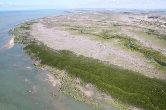 Les scientifiquesaccusent principalement le manque de pluie en 2014 et 2015 pour expliquer la disparition de la mangrove.